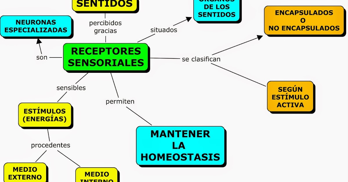 mind maps with Mapas Conceptuales Sobre Los Sentidos on 260505159666899896 likewise Top Travel Bloggers India together with Top Ten University Guelph as well 133208101449412804 in addition Ex le Of Hua Graph.