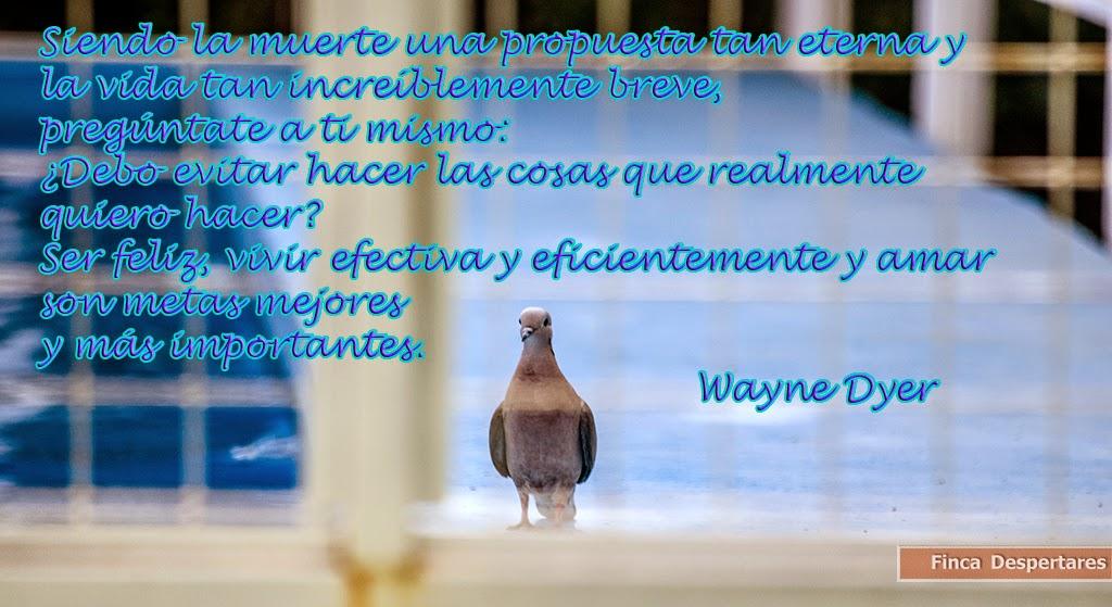 Finca Despertares - Wayne Dyer