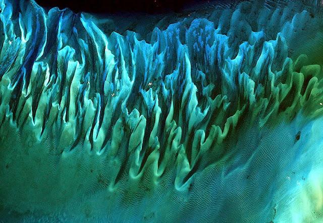 Seaweed In The Bahamas