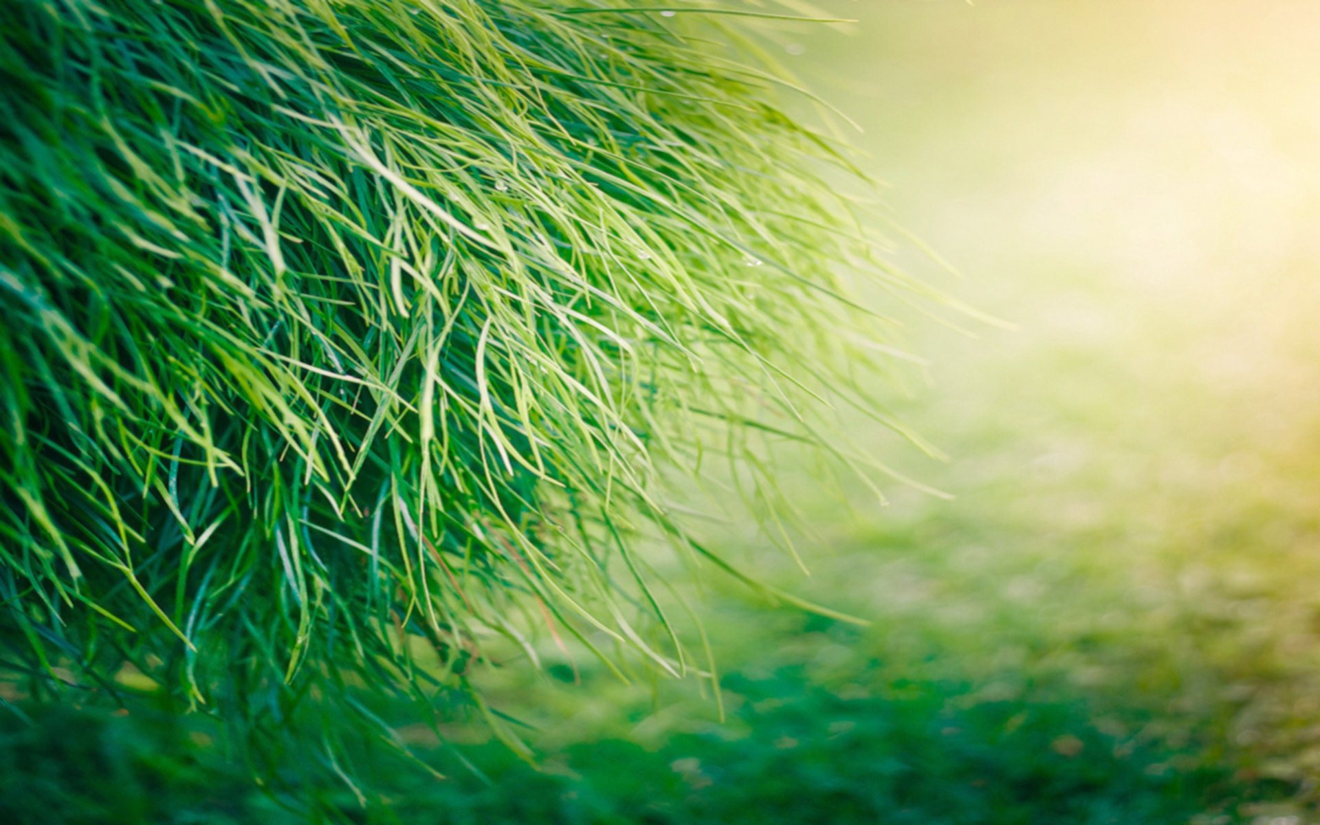 Beautiful green grass hd wallpapers for Pretty grass