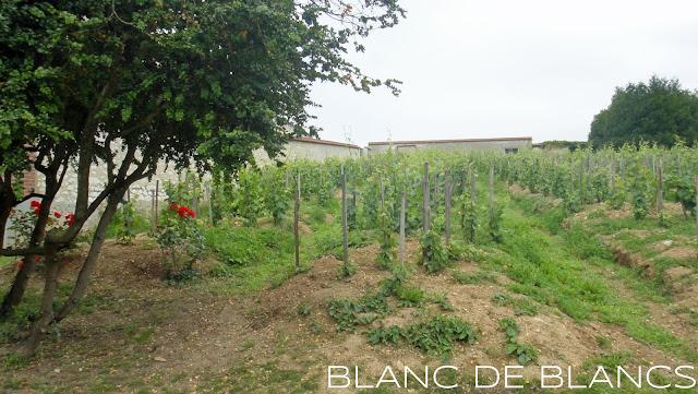 Bollinger Vieilles Vignes Françaises - www.blancdeblancs.fi