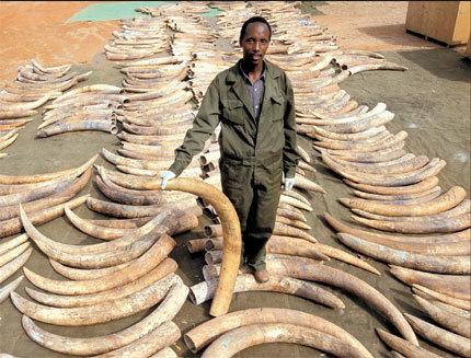 Ivory Antiques Elephant