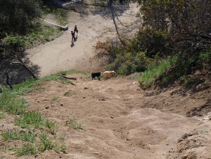 Runyon Canyon Labradors