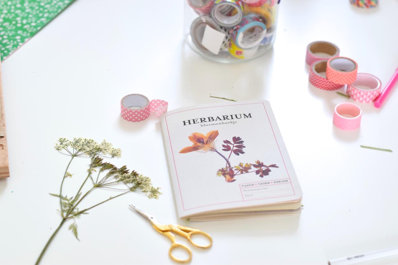 Как сделать гербарий в домашних условиях