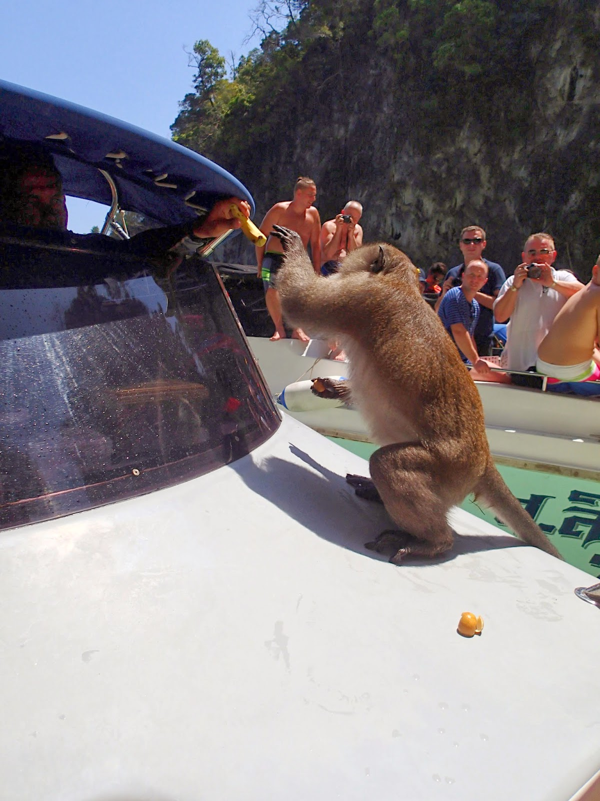 Monkey climbing onto our boat at Monkey Island at Phi Phi Thailand