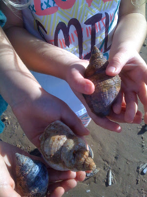 image of children holding shells on the beach