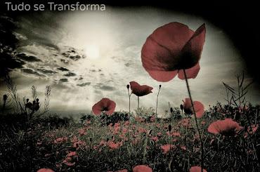Tudo se Transforma