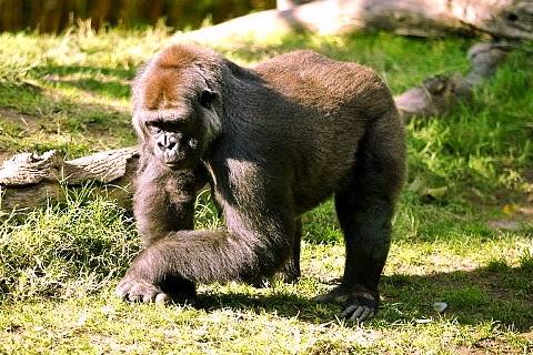 Case of 'Backward Evolution' Debunked