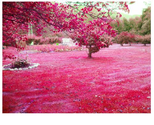 El parque rosa Lugares+magicos+1