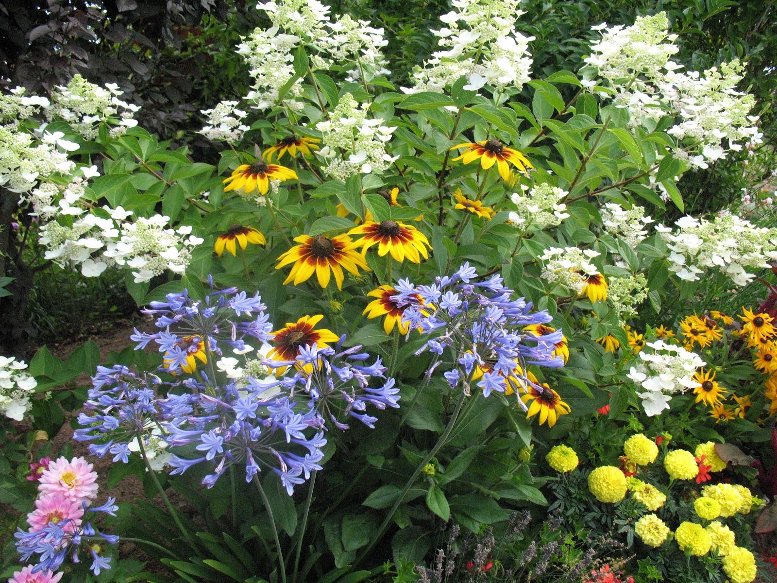 Roses du jardin ch neland taille des hydrang as - Taille des lauriers fleurs ...