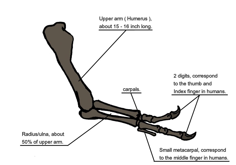 Arm Anatomy Bones segunda b group 1 football betting | bwin