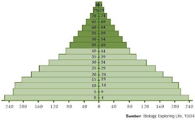Piramida Penduduk pada Negara Berkembang