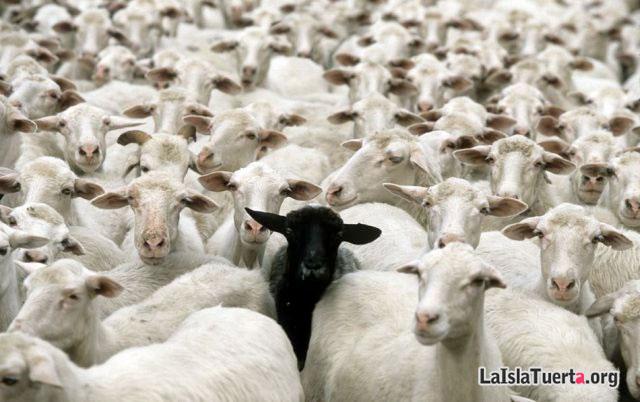 A entrenar.... - Página 3 La-oveja-negra