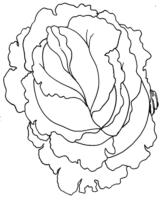 Naranja Animada Para Colorear IyEa78Bn5 also New Pg2 likewise Cartoony moreover Food Clipart Black And White moreover Coloring Pages Pg13. on lettuce shark