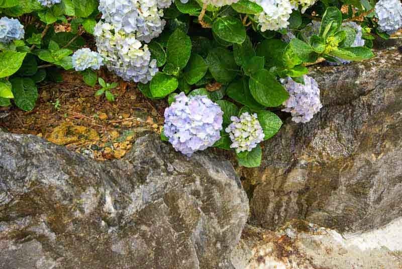rock garden and flowers