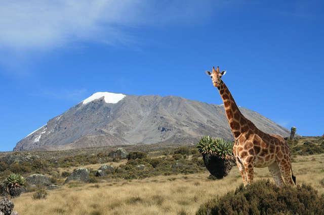 Charity: Help Me Climb Kilimanjaro! - Travel Bytez