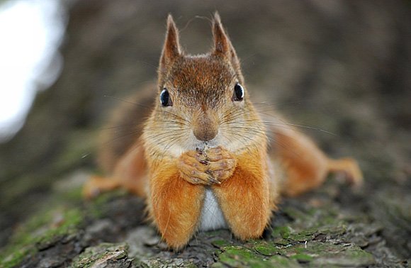 cute squirrel, squirrel pictures