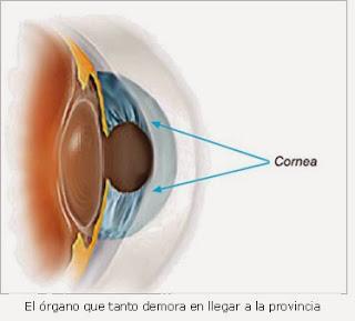 La cornea y su patología