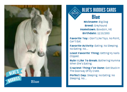 Blue's Blue Buffalo trading card