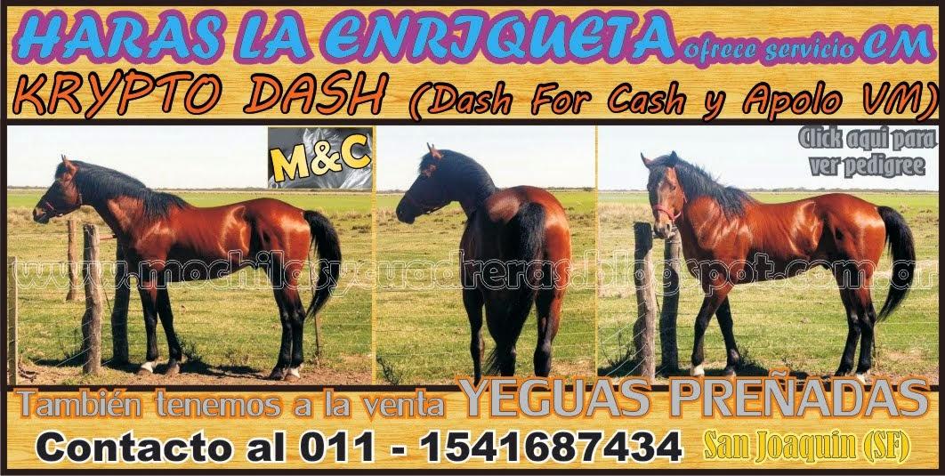 HARAS LA ENRIQUETA - 01/10/14