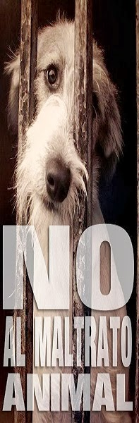 http://2.bp.blogspot.com/-ehHZdyTlHZk/UnsBpKUEuEI/AAAAAAAAHP4/b-hWXp4XN0g/s1600/NO-AL-MALTRATO-ANIMAL.jpg