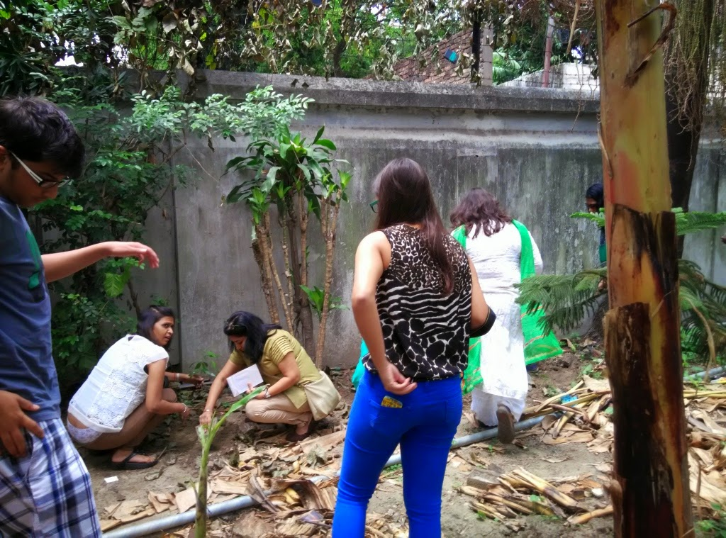 A dense wall of Polyalthia Longifolia will help prevent sound and air pollution at St Jospehs Old Age Home Kolkata