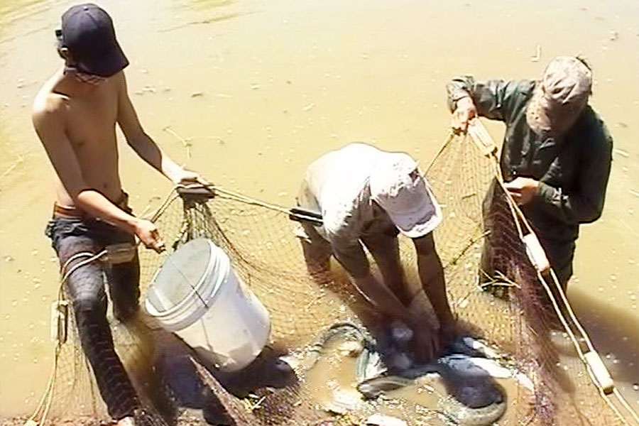 Gia Lai: Làm giàu từ nuôi cá chình