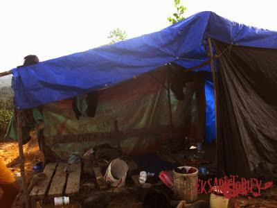 camp penanaman