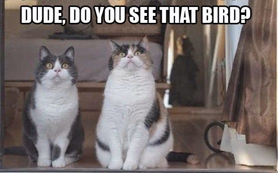 Two-Cat-Meme-See-That-Bird