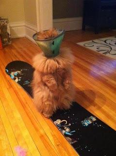 Gato candeeiro