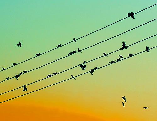 siluety ptáků na drátech v oranžovo zeleném západu slunce