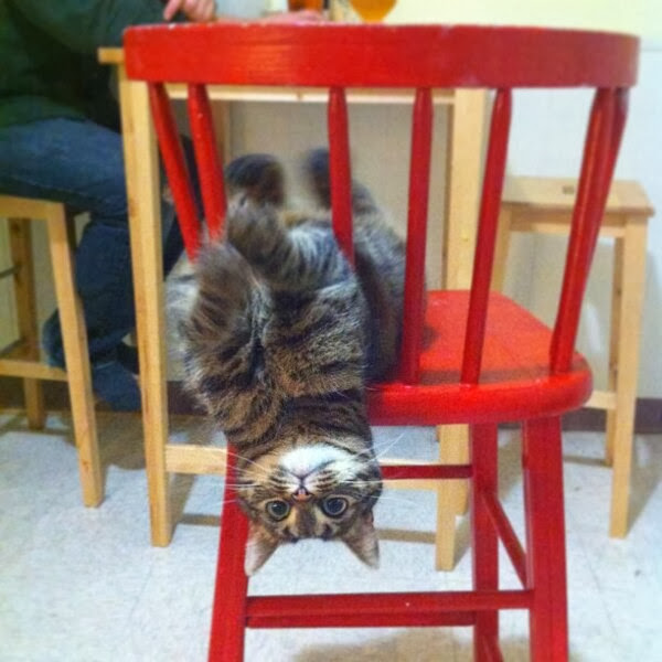 Funny cats - part 78 (35 pics + 10 gifs), cat pics, cat playing in chair