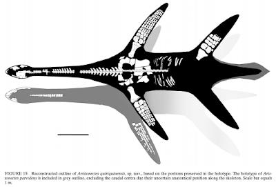 Aristonectes fossil