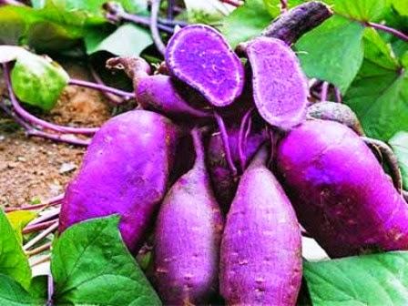 http://jalanmenujusukses-id.blogspot.com/2014/08/ubi-jalar-ungu-herbal-ampuh-penurun_30.html