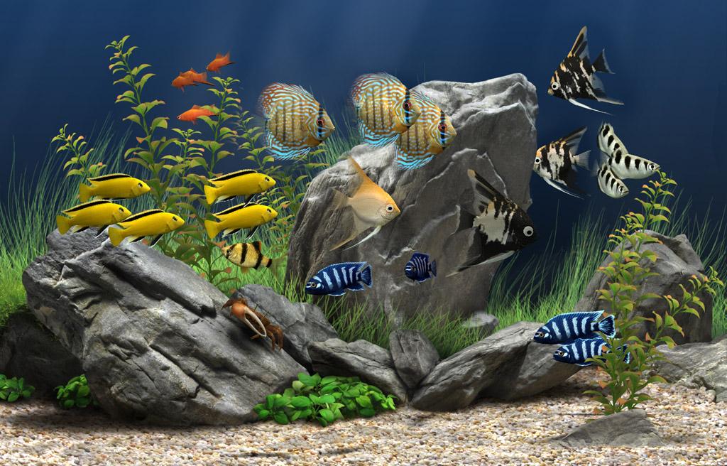 Aquarium Care Tips TIPS KESEHATAN