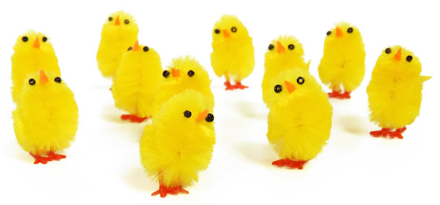 Cute little chicks that have nothing to do with this article : )