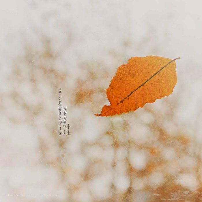 Chiếc lá mùa thu 22