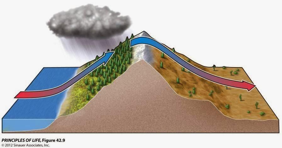 diagram of rain shadow effect diagram of barrier islands elsavadorla. Black Bedroom Furniture Sets. Home Design Ideas