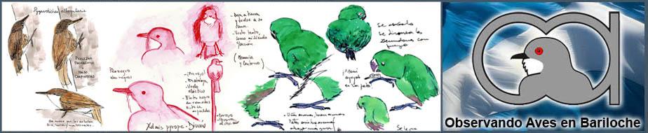 Aves en Bariloche