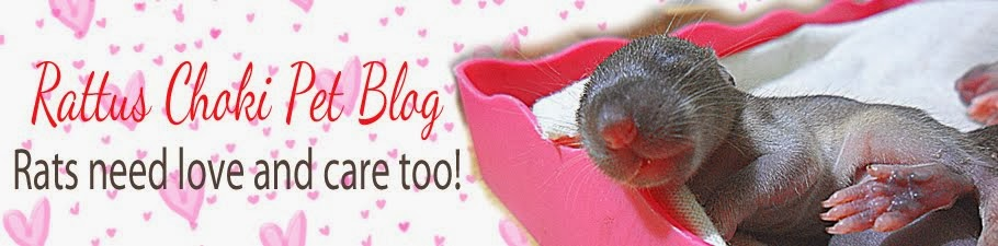 Rattus Choki Pet Blog