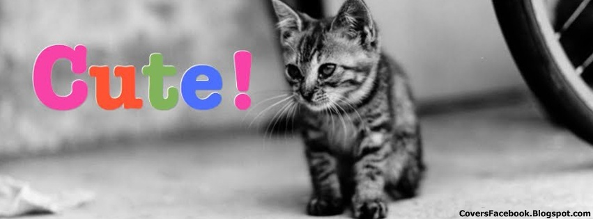 Cute Black & White Cat FB Covers