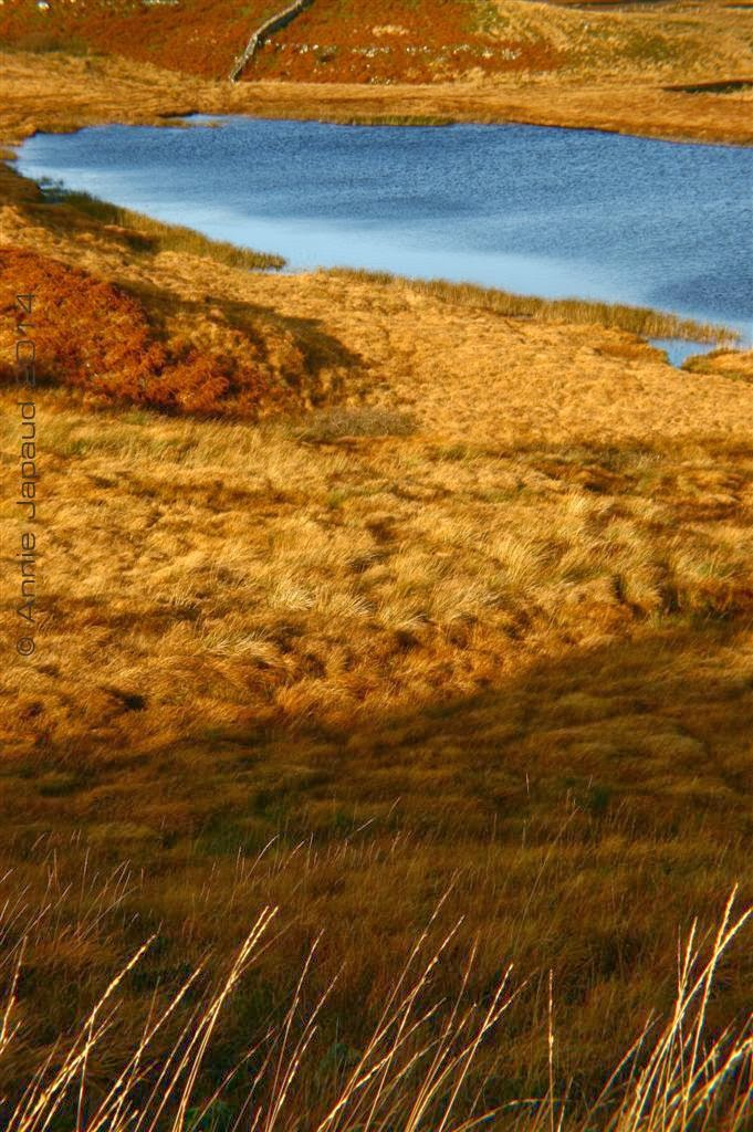 Connemara landscape, golden grasses and lake and mountains
