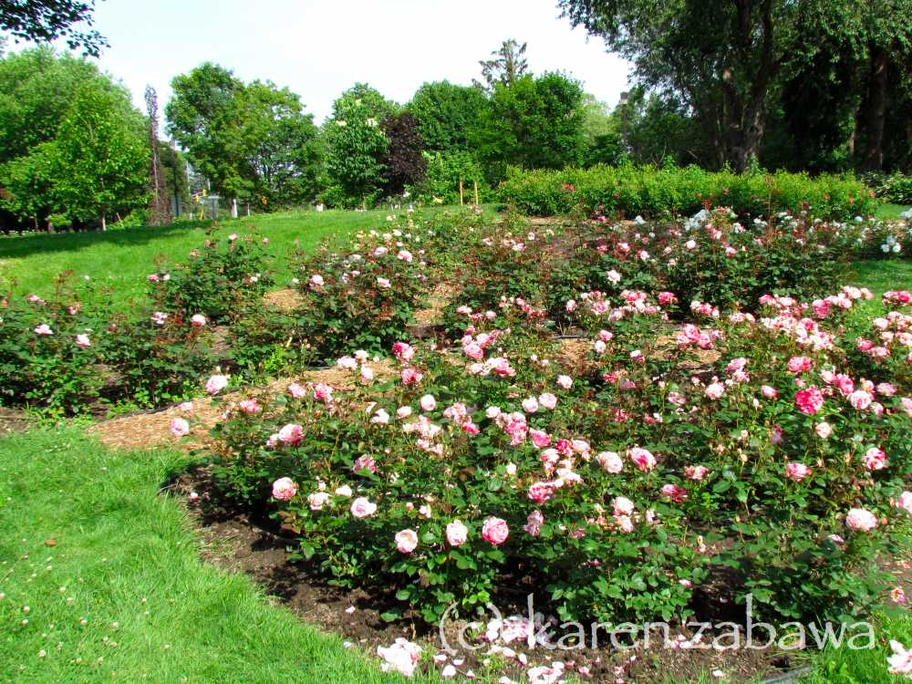 Brueckner Rhododendron Gardens: Rose Garden Design Legend Map