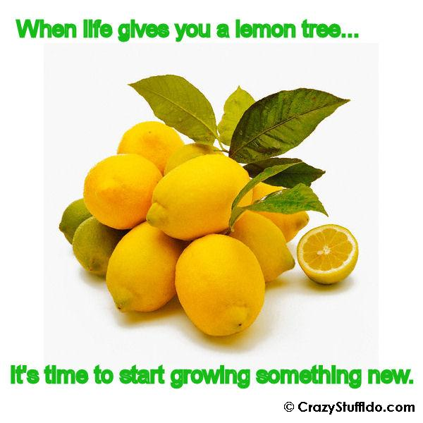 When Life Gives You a Lemon Tree...It's Time to Start Growing Something New