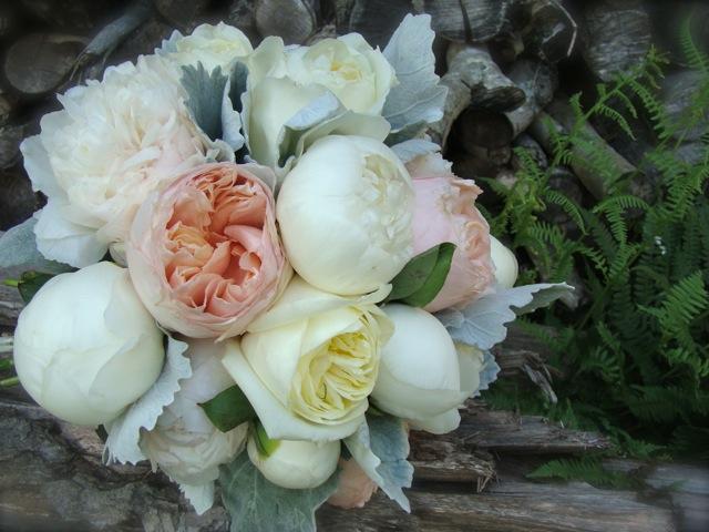 and white garden roses  White Juliet Rose