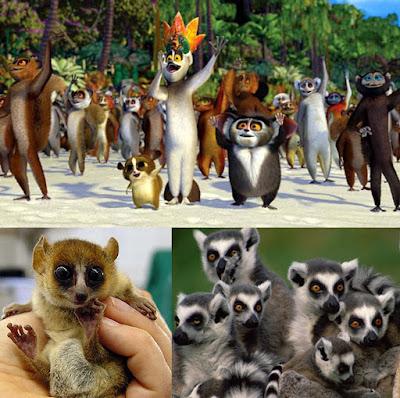 Os lêmures são macacos?