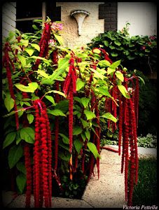 Adorned in Reds: The Front Garden of Goth