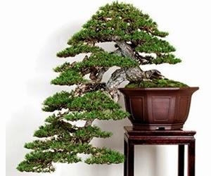 """<img src=""""bonsai10.jpg"""" alt=""""foto bonsai"""">"""