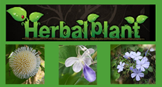 Herbal Plants of Asia