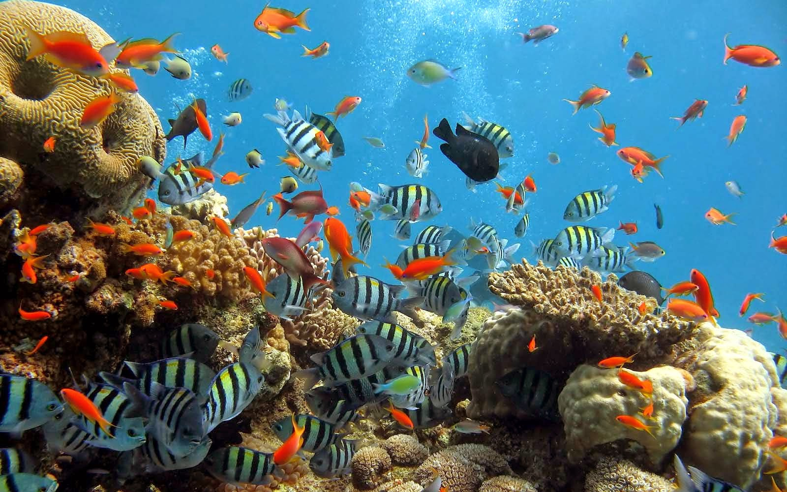 Image result for gambar taman laut bunaken